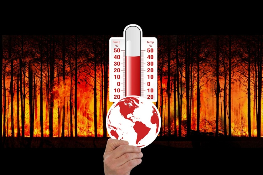 climate-change-umwelt_wald