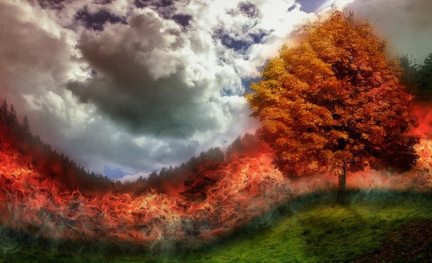 fire-waldbrand